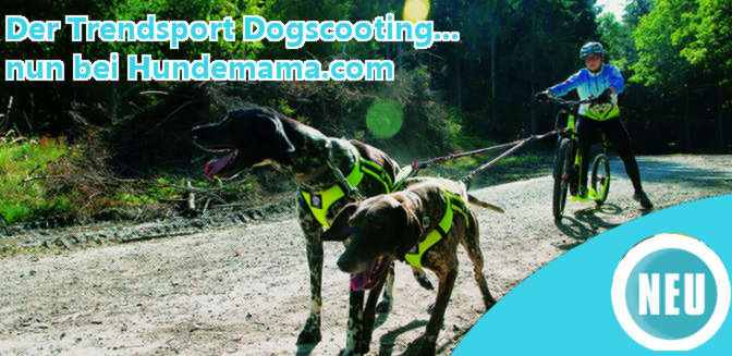 Dogscooter Hundesport